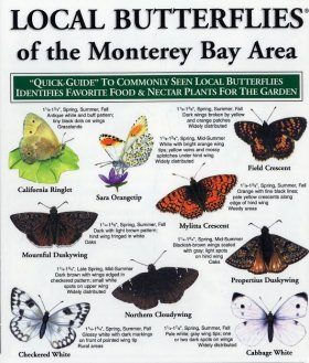 Quick Guide to Local Butterflies of the Monterey Bay Area