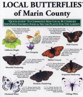 Quick Guide to Local Butterflies of Marin County