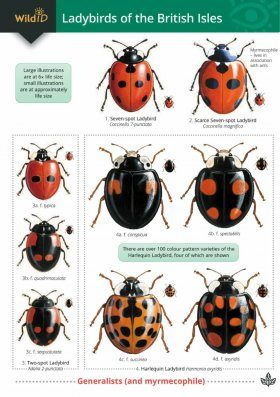 Guide to Ladybirds of the British Isles