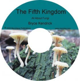 The Fifth Kingdom: V. 5.2, September 2008