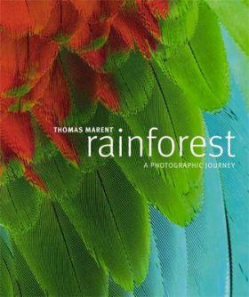 Rainforest: A Photographic Journey
