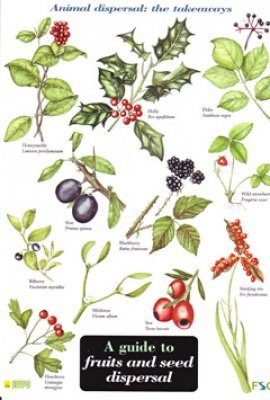A Guide to Fruits and Seed Dispersal
