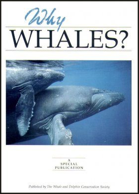 Why Whales?