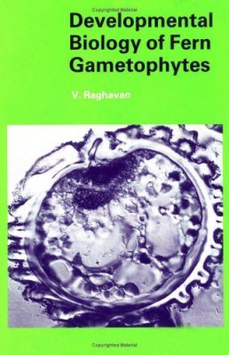 Developmental Biology of Fern Gametophytes