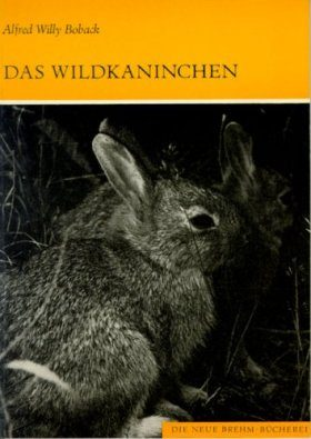Das Wildkaninchen (European Rabbit)
