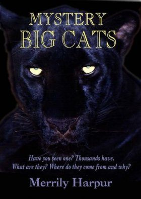 Mystery Big Cats