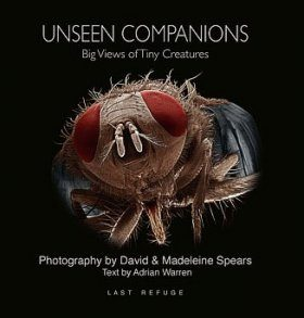 Unseen Companions