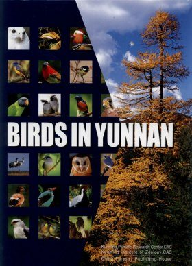 Birds in Yunnan