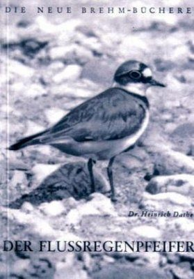 Der Flussregenpfeifer (Little Ringed Plover)
