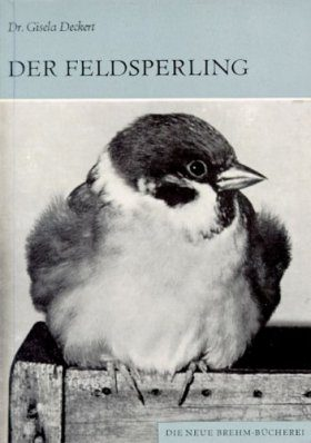 Der Feldsperling (Tree Sparrow)