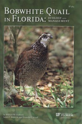 Bobwhite Quail in Florida
