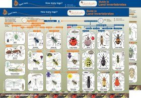 Guide to Land Invertebrates