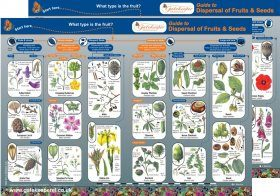Guide to Dispersal of Fruits & Seeds