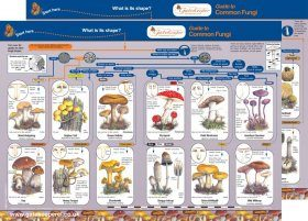 Guide to Common Fungi