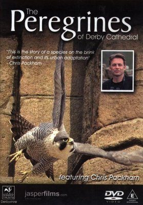 The Peregrines of Derby Cathedral (All Regions)