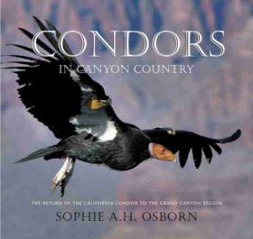 Condors in Canyon Country