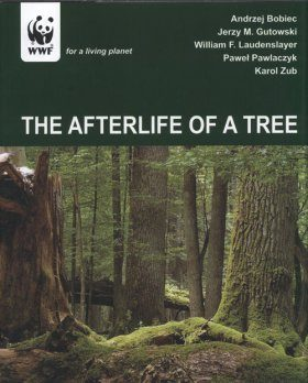 The Afterlife of a Tree