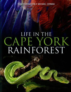 Life in the Cape York Rainforest