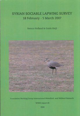 Syrian Sociable Lapwing Survey