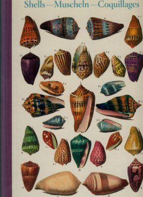 Shells / Muscheln / Coquillages