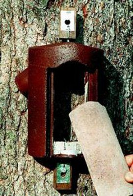 Schwegler 2B Tree Creeper Nest Box with Predator Protection