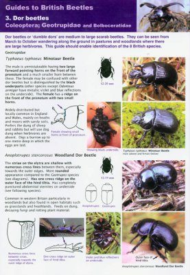 Guides to British Beetles 3. Dor Beetles