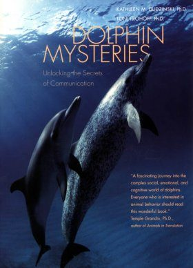 Dolphin Mysteries