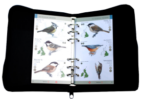 BirdVoice: British Birds Guide only
