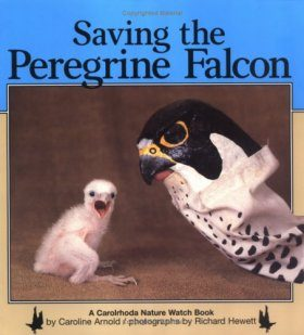Saving the Peregrine Falcon