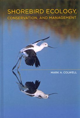 Shorebird Ecology, Conservation, and Management