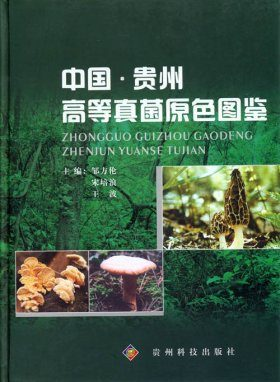 Coloured Illustration of Higher Fungi from Guizhou in China