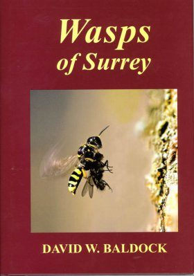 Wasps of Surrey