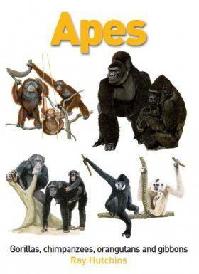 Apes: Gorillas, Chimpanzees, Orangutans and Gibbons