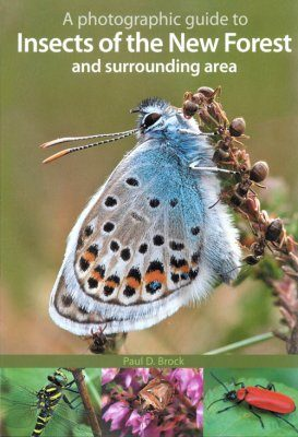 A Photographic Guide to Insects of the New Forest and Surrounding Area