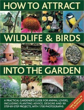 How to Attract Wildlife and Birds into the Garden