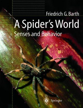 A Spider's World