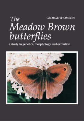 The Meadow Brown Butterflies