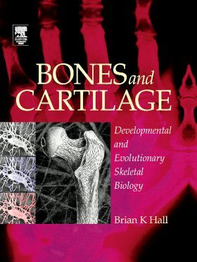 Bones and Cartilage