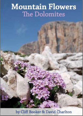 Mountain Flowers: The Dolomites