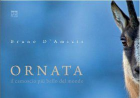 Ornata: The most beautiful chamois of the world / Ornata: Il Camoscio Piu' Bello del Mondo