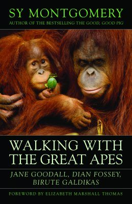 Walking with the Great Apes