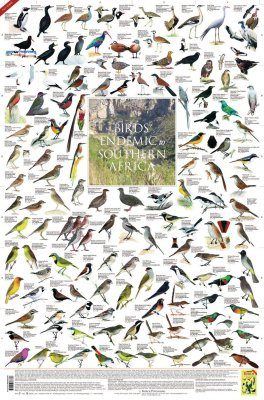 Birds Endemic to Southern Africa - Poster