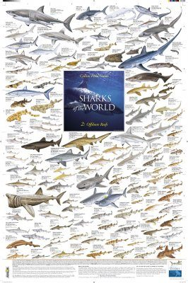 Sharks of the World, 2: Offshore Reefs - Poster