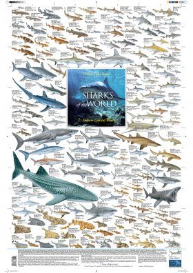 Sharks of the World, 1: Inshore Coastal Waters - Poster