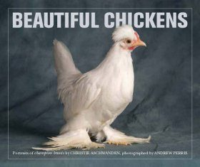 Beautiful Chickens