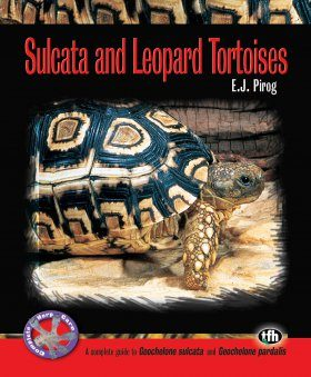 Sulcata and Leopard Tortoises