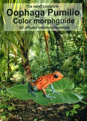 The Most Complete Oophaga Pumilio Color Morphguide