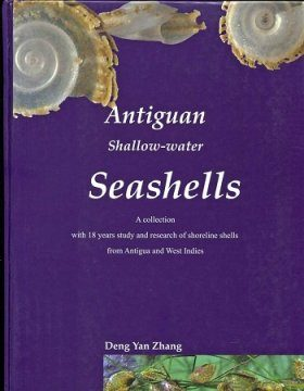 Antiguan Shallow-Water Seashells