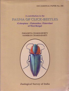 A Contribution to the Fauna of Click-Beetles