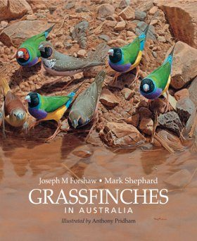 Grassfinches in Australia